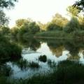 Mura_mrtvica4